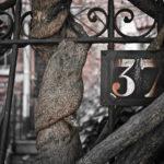 #98 Entangled 37