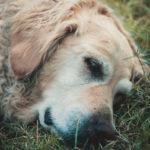 #233 The snoring dog