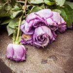 #317 Sad roses
