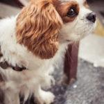 #325 Puppy