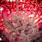 #357 Redrum christmas tree