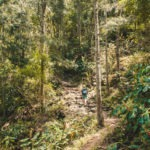 #659 Jungle