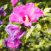 #2047 Fleur