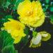 #2122 Fleur en retard