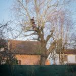 #2195 Voisin arboricole