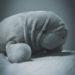 #2253 Gros dugong