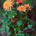 #2339 Fleurodendron