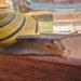 #2366 Slipouille jaune IV