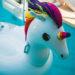 #2406 Licorne des mers