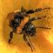 #2449 Pollen
