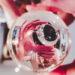 #2591 Reflets zarbis